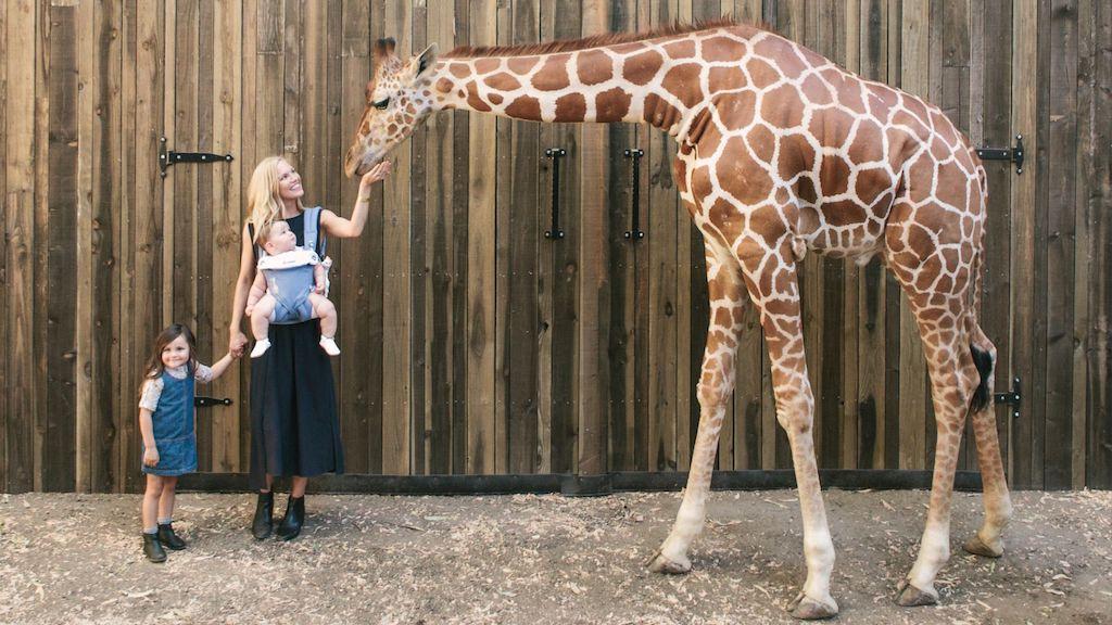 Rencontre avec une girafe pas comme les autres